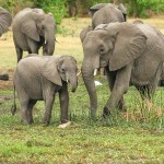 safari - Botswana